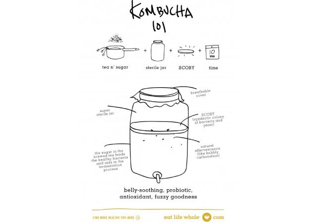 Kombucha-101a